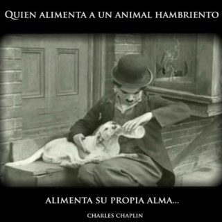 quien alimenta a un animal hambriento alimenta su propia alma